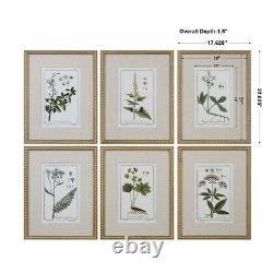 Green Floral Botanical Study Framed Wall Art Prints Set Of 6 Uttermost 33651
